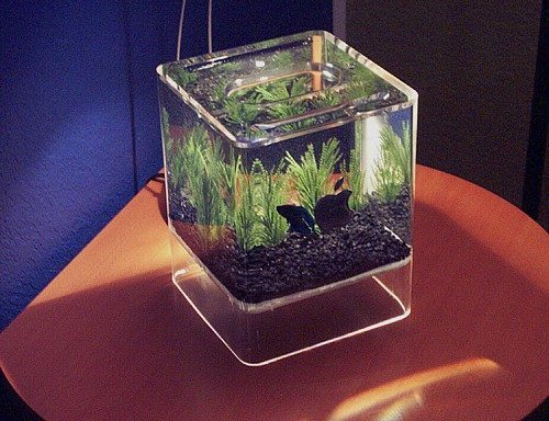 Apple 39 s new mac pro plus to include a fishtank the high for Desktop fish tank
