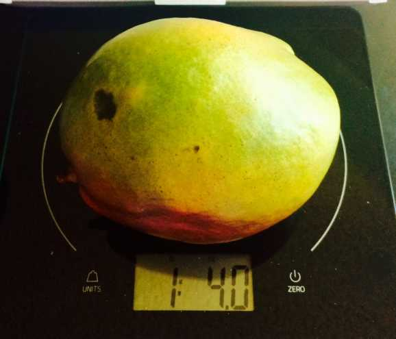 Weighing a Mango on the food scale