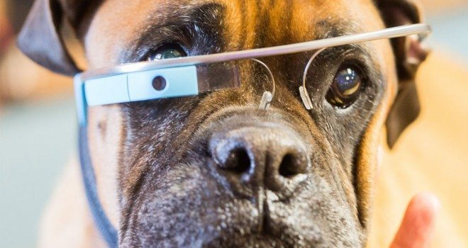 New Technology To Help Animal Shelters Save Pets The