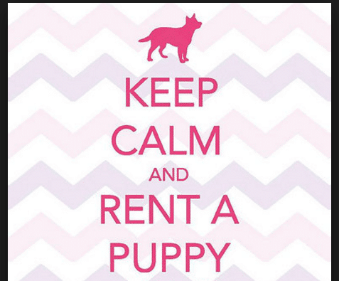 where can i rent a puppy or kitten here 39 s 5 legit companies you can rent a pet from the high. Black Bedroom Furniture Sets. Home Design Ideas