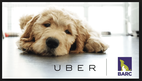 uber dogs