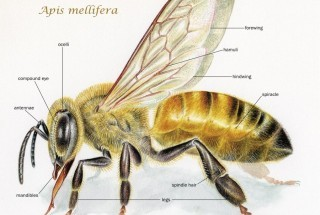 Is Bee Science Being Hushed Up?