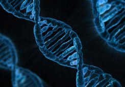 Genetic mutation, DNA mutation, human genetic mutation, what is genetic mutation