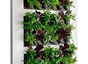 Indoor Vertical Garden Solutions for Your Wall