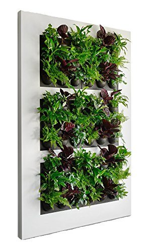 Living wall, vertical garden, plug and plant, vertical planter