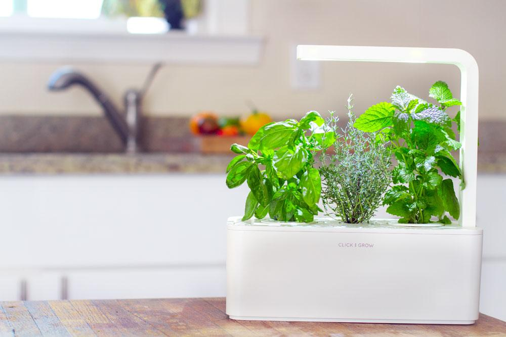 Indoor garden systems that let anyone grow plants the high tech plug plant plug plant alternatives easy growing hydroponics garden desk workwithnaturefo