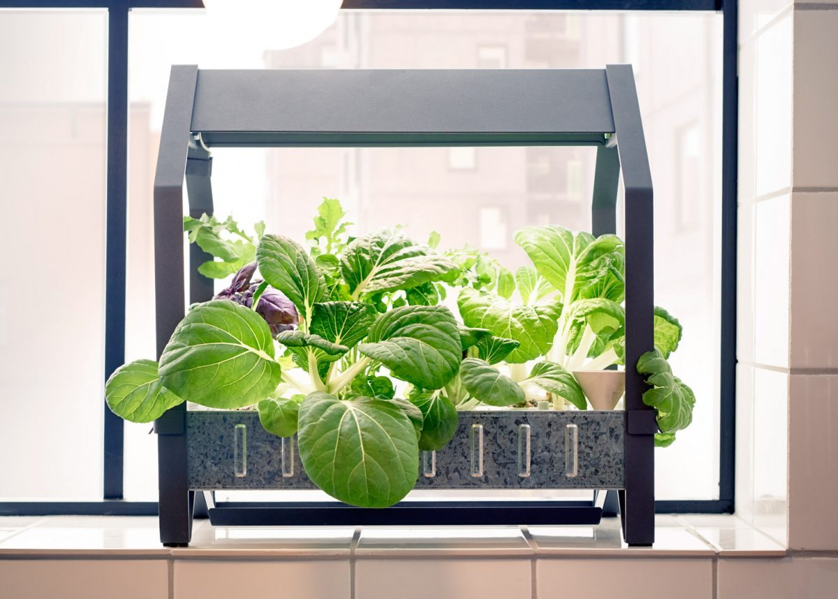 Indoor Garden Systems That Let Anyone Grow Plants The High Tech