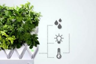 Indoor Garden Systems That Let Anyone Grow Plants
