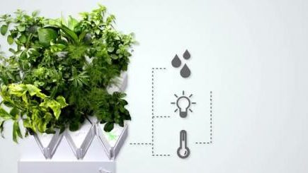 Plug & Plant, Plug & Plant alternatives, easy growing, hydroponics garden, desk garden, easy garden,